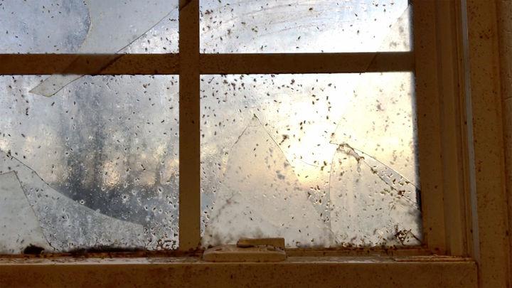 Rousing morning splitting near the window
